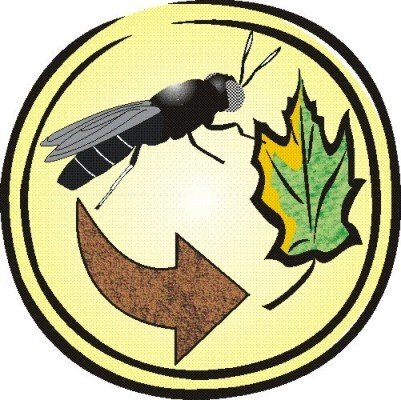 image of DipTerra LLC logo with adult BSF, recycling arrow and leaf arranged inside yellow circle