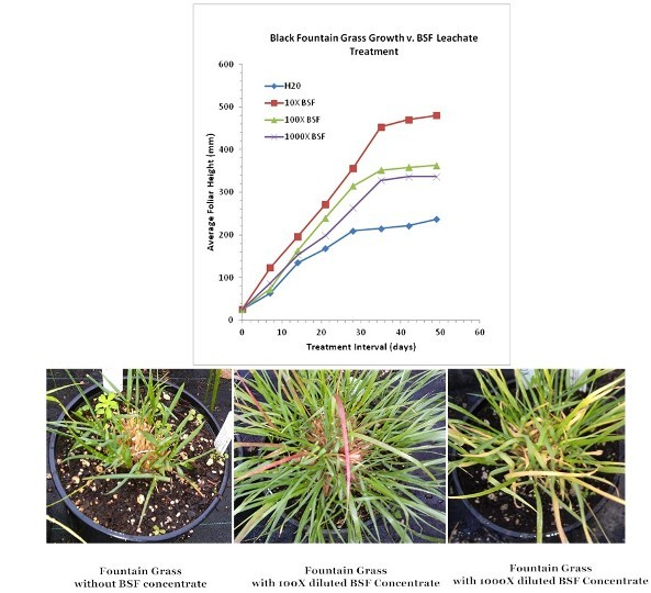 Effect of varying dilutions of BSF leachate on the growth of Fountain grass