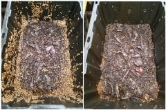 thousands of bsf larvae growing inside bsf bioreactors on mixtures of food scrap and bulking agents